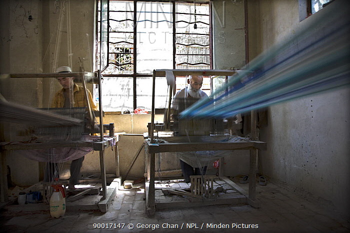 Two men silk weaving on wooden looms at Hotan (Hetian), a town along the ancient Silk Road Xinjiang Province, North-west China July 2006, BBC Wild China series  -  George Chan/ npl