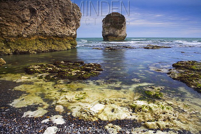 Chalk cliffs, sea stack and wave-cut platform at Freshwater Bay, Isle of Wight, England  -  Adam Burton/ npl