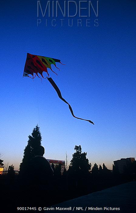 Kite Flying at the Temple of Heaven, Beijing, China  -  Gavin Maxwell/ npl