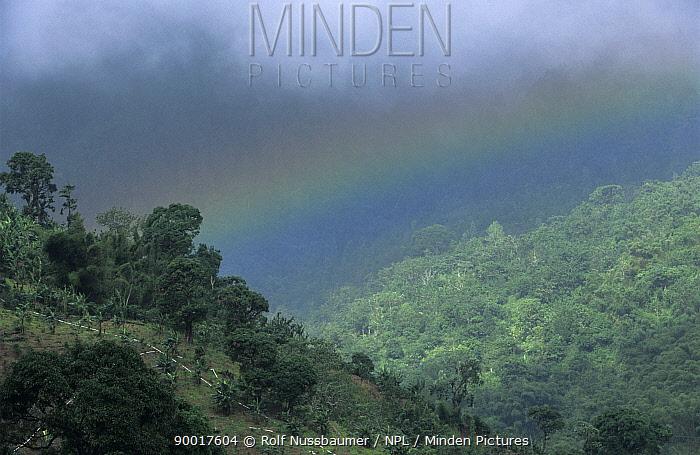 Rainbow over Coffee Plantation in Blue Mountains, Jamaica  -  Rolf Nussbaumer/ npl