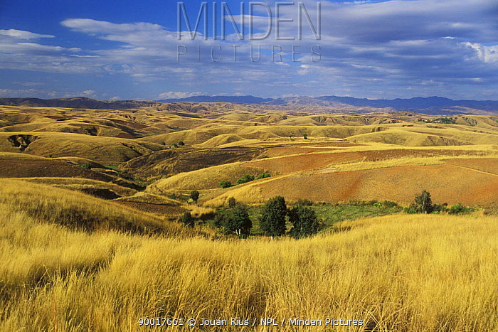 Hilly pastures in Central Madagascar  -  Jouan & Rius/ npl