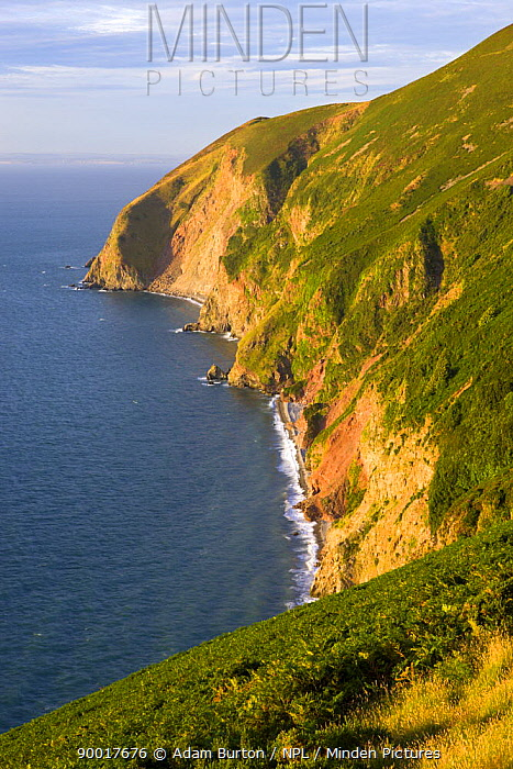 Foreland Point cliffs near Lynmouth, Exmoor National Park, Devon, England  -  Adam Burton/ npl