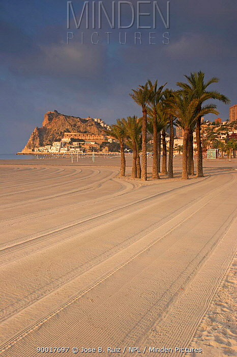 View along beach at Sunrise, Cala poniente, Benidorm, Spain  -  Jose B. Ruiz/ npl