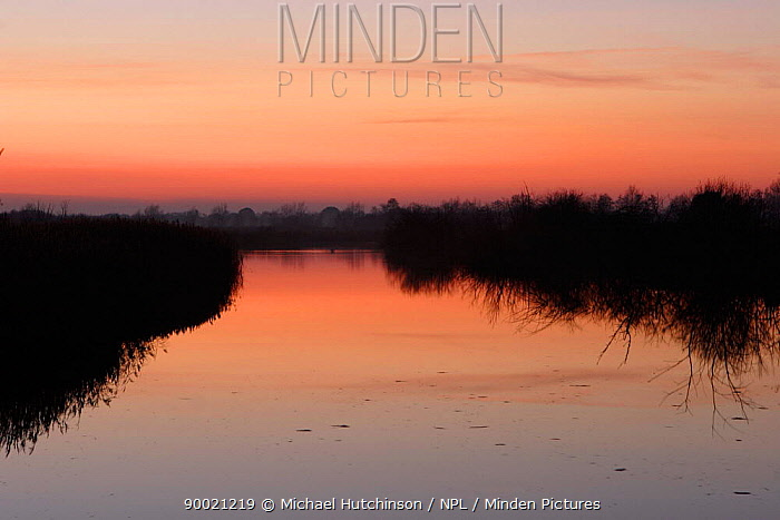 Lake and reedbeds at dusk, Westhay Nature Reserve, Somerset, UK  -  Michael Hutchinson/ npl