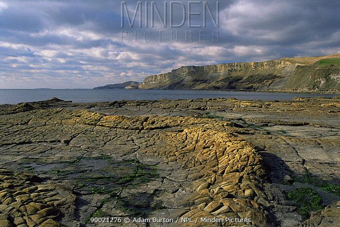 Wave-cut platform and cliffs at Hobarrow bay, Jurassic Coast World Heritage Site, Dorset  -  Adam Burton/ npl