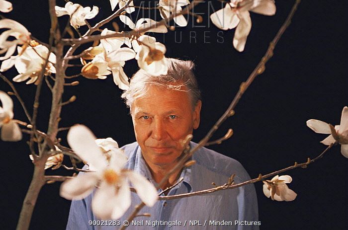 David Attenborough on location in Japan, with Magnolia grown from 2,000 year-old seed, filming for BBC television series Private Life of Plants, 1994  -  Neil Nightingale/ npl