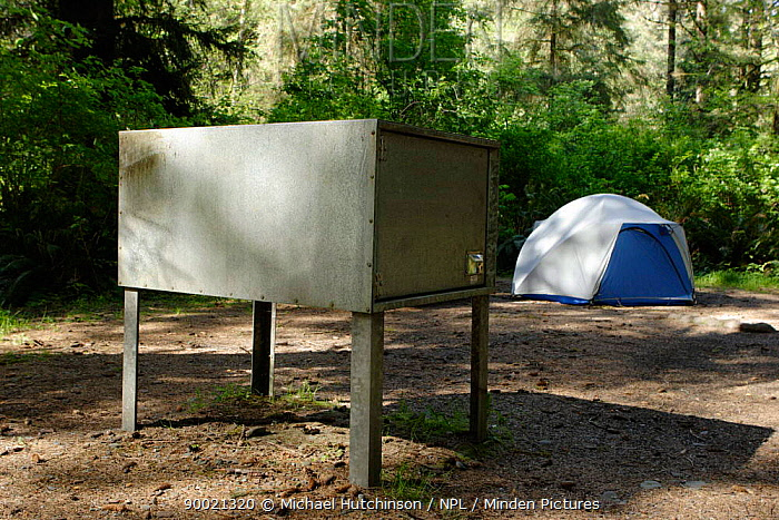 Black Bear (Ursus americanus) box on camp site, Prairie Creek, Redwood State Park, California Campers must put all food, toiletries and other odorous products in bear resistant boxes  -  Michael Hutchinson/ npl