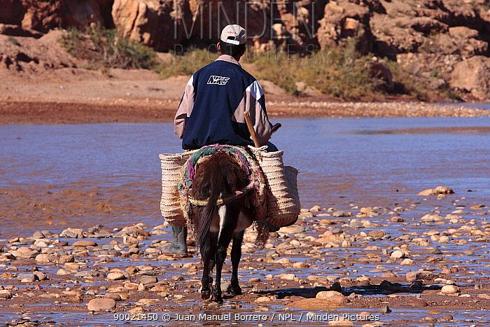 Man crossing Asif Mellah river on a donkey, Morocco December 2007  -  Juan Manuel Borrero/ npl