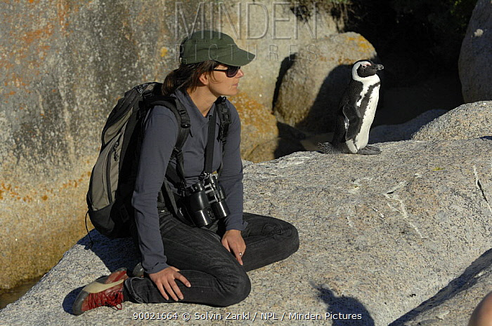 Black-footed Penguin (Spheniscus demersus) and tourists Boulders beach, South Africa  -  Solvin Zankl/ npl