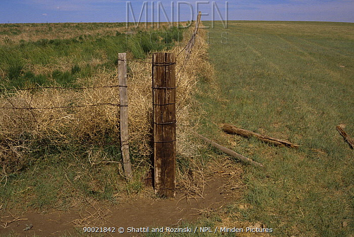 Fence separating grazed land on right from natural growth on left, USA, 1990  -  Shattil & Rozinski/ npl