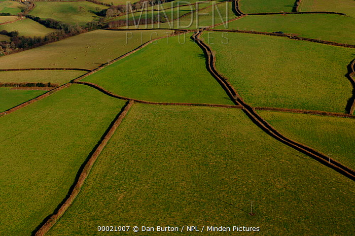 Aerial view of patchwork of fields and hedges, and country lane, Devon, UK winter  -  Dan Burton/ npl