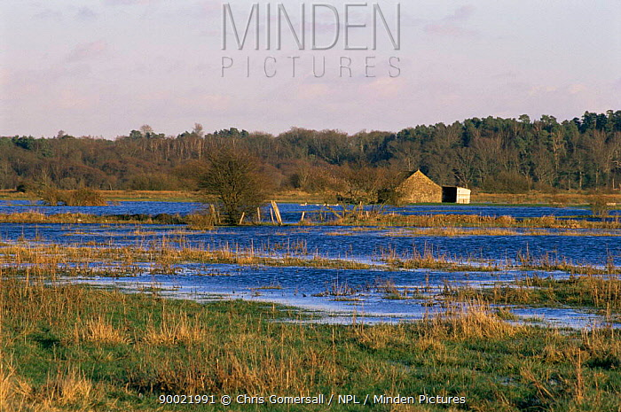 Flooded meadows in winter, Amberley Wild Brooks, Sussex, UK  -  Chris Gomersall/ npl