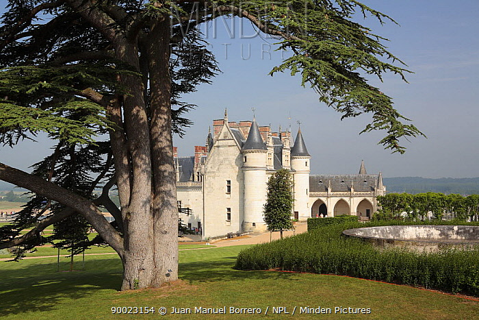 Castle of Amboise viewed from its garden in the Loire Valley, France  -  Juan Manuel Borrero/ npl