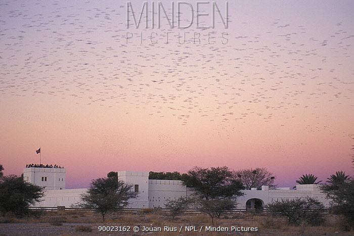 Namutoni Fort at sunset with a flock of birds flying past with tourists standing on one of the towers, Etosha NP, Namibia  -  Jouan & Rius/ npl