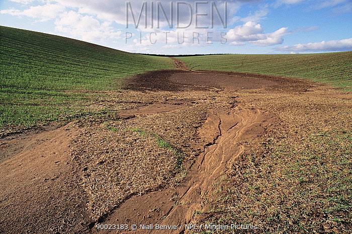 Soil erosion in field of winter wheat Fife, Scotland,  -  Niall Benvie/ npl