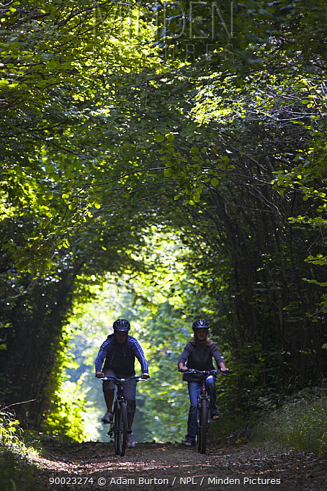 Off-road cyclists ride along a tree lined bridleway on Harley Down in Cranborne Chase, Dorset, England  -  Adam Burton/ npl