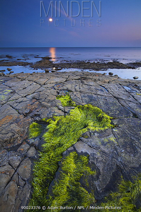 Moon glow over Kimmeridge Bay, Jurassic Coast World Heritage Site, Dorset, England  -  Adam Burton/ npl