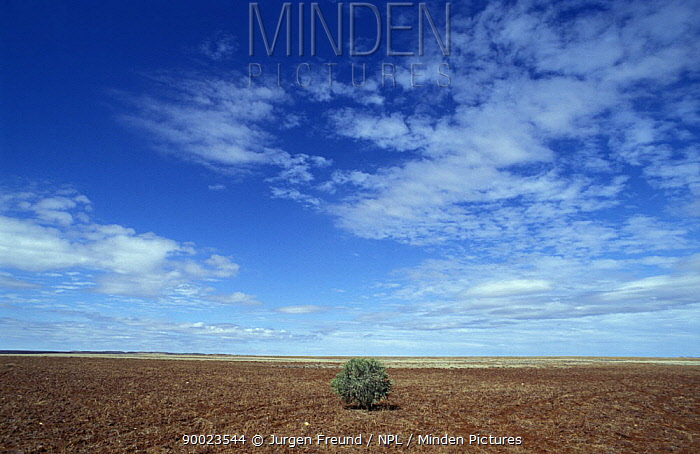 One small tree in a desert of Western Australia  -  Jurgen Freund/ npl