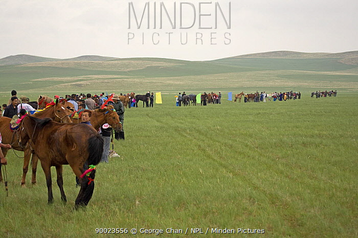 Mongolian horses and jockies preparing for the annual Nadam horse race, Inner Mongolia June 2006  -  George Chan/ npl