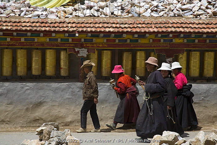 People carrying prayer wheels at Gyanag Mani wall, with millions of Tibetan mani stones, is the largest in the world Yushu, Qinghai Province, Tibet, China  -  Dr. Axel Gebauer/ npl