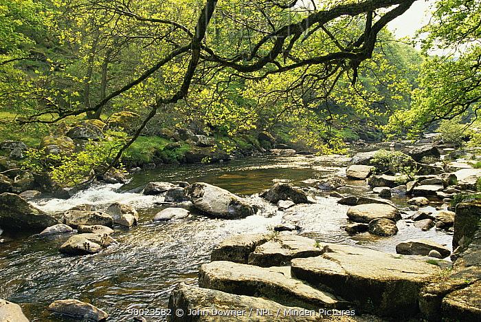 River Dart, Dart Valley, Devon England  -  John Downer/ npl
