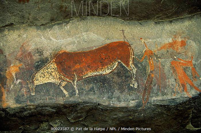 Rock art showing Eland, Game Pass Shelter, Kamberg NR, KwaZulu Natal, South Africa 1995  -  Pat De La Harpe/ npl