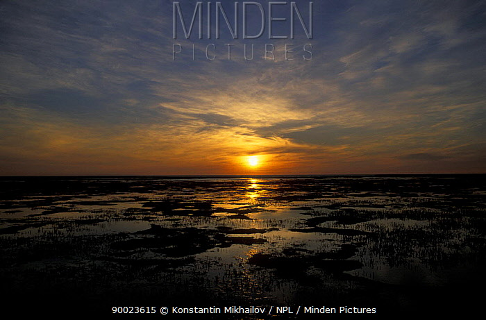 Sunset over wetlands, lower reaches of Pechora river, Nenetskiy Zapovednik reserve, tundra zone, Russia  -  Konstantin Mikhailov/ npl