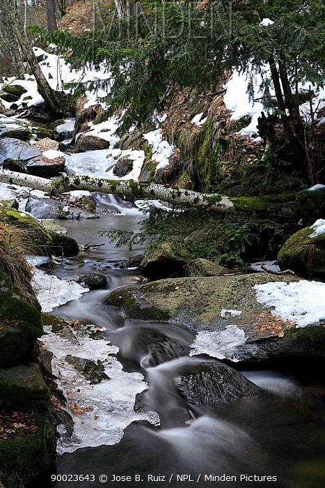 Stream with ice formed on surface, Canencia, Spain  -  Jose B. Ruiz/ npl