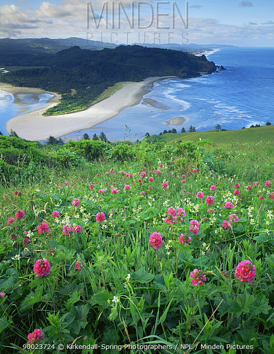 Wild flowers growing on Cascade Head overlooking the Salmon River Mouth, Pacific Coast, Oregon, USA  -  Kirkendall-spring/ npl