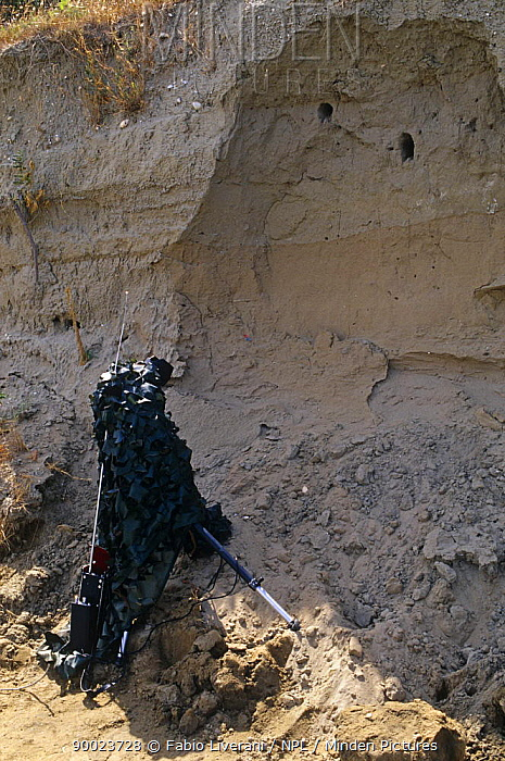 Camouflaged remote controlled camera on the riverbank of Resina river, Umbria, Italy, filming European bee eater nests in bank  -  Fabio Liverani/ npl