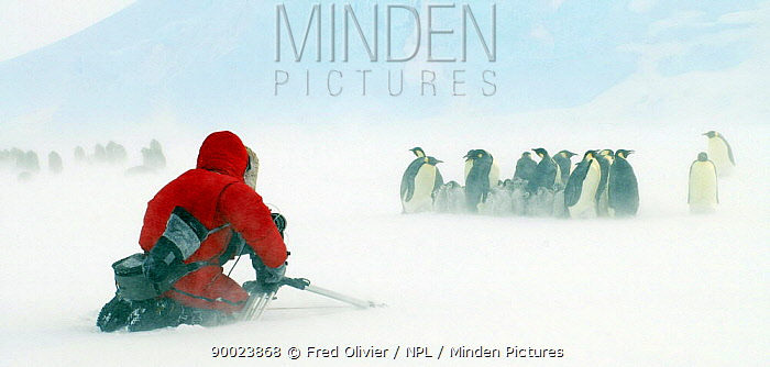 BBC Film crew member filming colony of Emperor penguins in snow blizzard, Antarctica, for Planet Earth series 2005  -  Fred Olivier/ npl