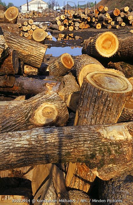 Timber store, Ussuriland, Siberia, Russia  -  Konstantin Mikhailov/ npl
