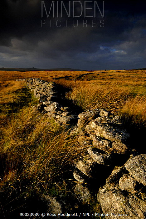 Dark rain clouds above dry stone wall and moorland, looking toward Bellever, Dartmoor NP, Devon, UK  -  Ross Hoddinott/ npl