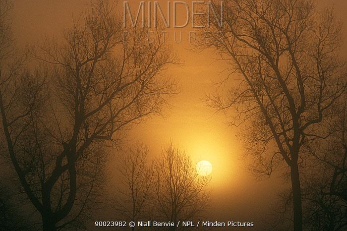 Mist at dusk in Scotland  -  Niall Benvie/ npl