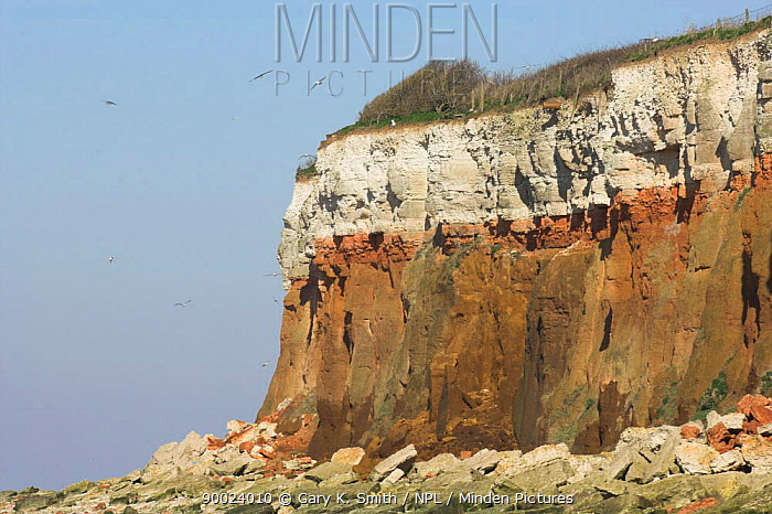 Hunstanton cliffs, showing the red chalk, white, chalk and carr stone structure of the cliffs, Norfolk, UK  -  Gary K. Smith/ npl