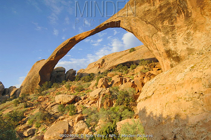 Landscape Arch, Arches NP, Utah, USA  -  Rob Tilley/ npl