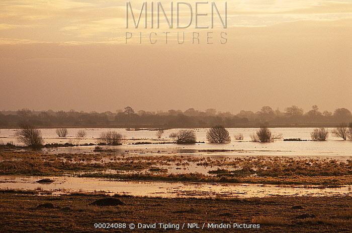 Flooded grazing marsh, Wheldrake Ings, Lower Derwent valley, Yorkshire, UK  -  David Tipling/ npl