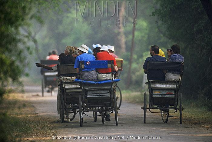Tourists in cycle rickshaws, Keoladeo Ghana, Bharatpur NP, Rajasthan, India  -  Bernard Castelein/ npl