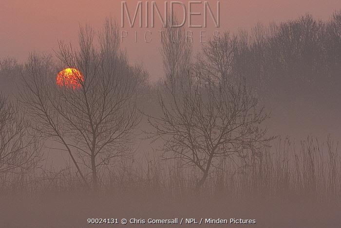Sunrise over the Norfolk Broads Hickling Broad, Norfolk, England March  -  Chris Gomersall/ npl