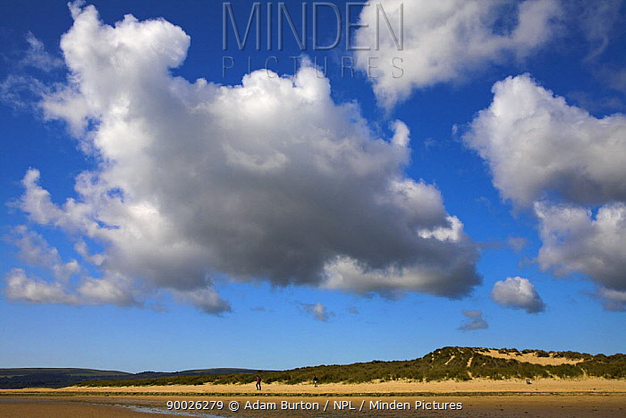 Summer day on the sand dunes of Studland Bay, Dorset, England  -  Adam Burton/ npl