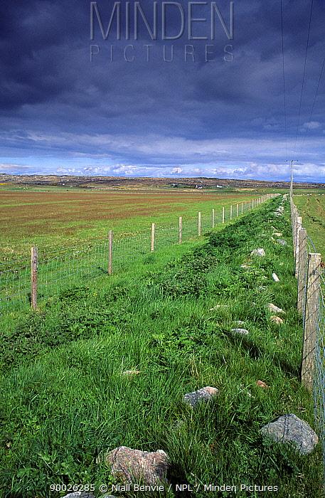 Corncrake (Crex crex) conservation, corridor beside agricultural land Coll, Argyll, Scotland  -  Niall Benvie/ npl
