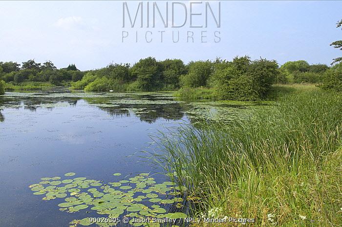 Freshwater pond with water lilies, Croston, Lancashire, UK, The Croston Worm, Ribbon worm (Prostoma jenningsi) is endemic to the pond  -  Jason Smalley/ npl
