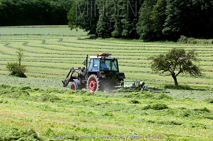 Tractor with mower cutting grass for hay, Luxembourg  -  Philippe Clement/ npl