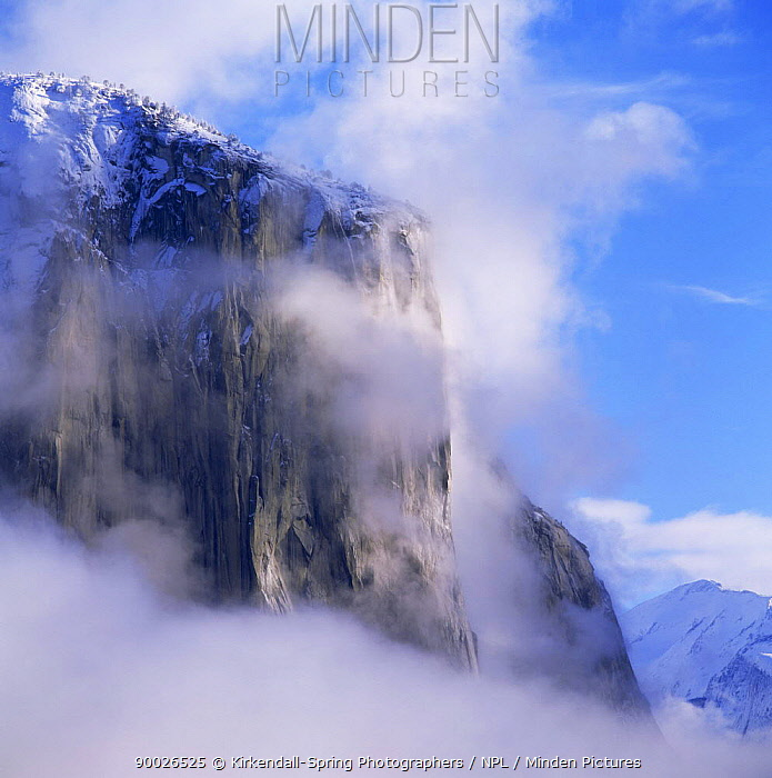 El Capitan in the mist after a winter storm, Yosemite NP, California, USA  -  Kirkendall-spring/ npl