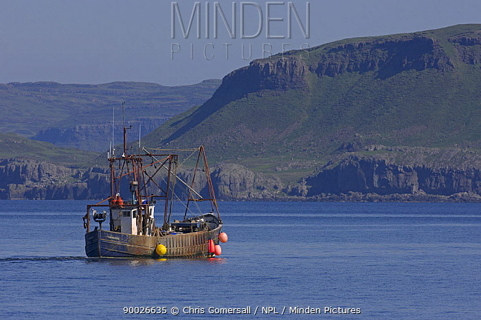 Scottish inshore trawler fishing for Dublin Bay prawns off the Isle of Mull, Inner Hebrides, Scotland June  -  Chris Gomersall/ npl
