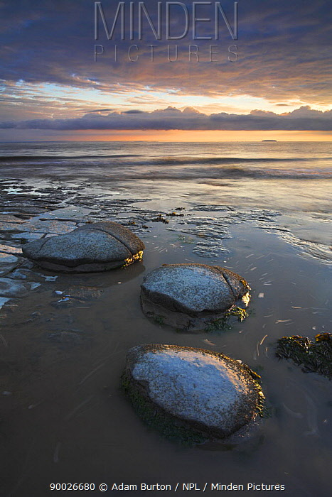 Rounded boulders on the shore of Kilve Beach beside Bristol Channel On the horizon is the island of Steepholm Kilve, Somerset, England  -  Adam Burton/ npl