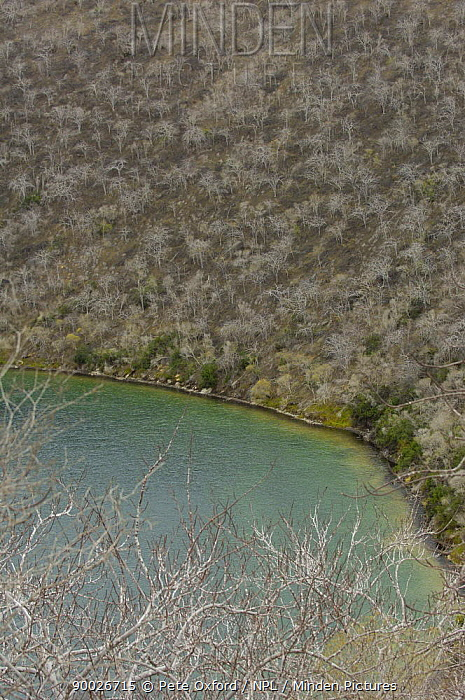 Aerial view of Palo santo trees (Bursera galapageia) growing in the arid zone of Tagus Cove, Isabela Island around the circular crater of Darwin's Lake, Galapagos  -  Pete Oxford/ npl
