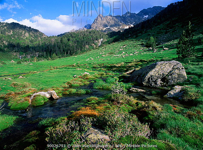Pla de Boet, Vallferrera Valley, The Pyrenees, Lerida, Catalonia, Spain  -  Juan Manuel Borrero/ npl