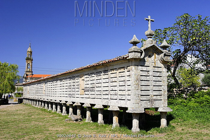 Horreo (traditional stone granary built on stilts to avoid access of rodents) in Carnota, Costa da Morte This is the largest Horreo in Galicia, Spain  -  Jose B. Ruiz/ npl