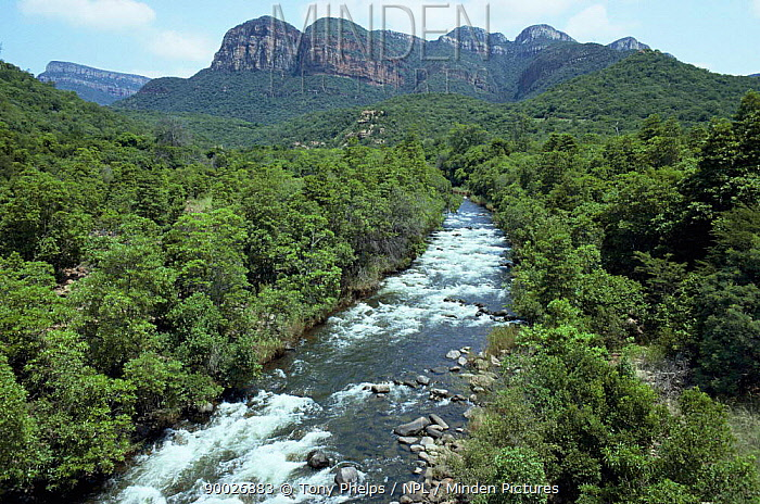 Blyde River running through forest, North Province, South Africa  -  Tony Phelps/ npl